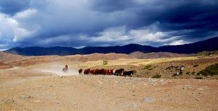 Paarden in het lopen stock foto's