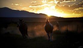 Paarden het lopen Stock Foto's