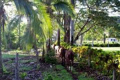 Paarden het lopen Royalty-vrije Stock Foto's