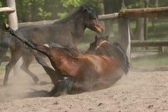 Paarden in het Park Stock Foto