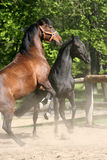 Paarden in het Park Royalty-vrije Stock Afbeelding