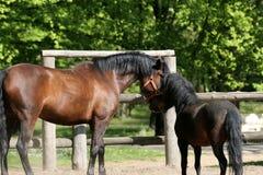 Paarden in het Park Stock Foto's