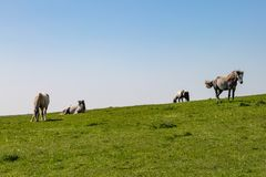 Paarden in het platteland royalty-vrije stock fotografie