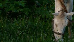 Paarden in het weiland op zonsondergangtijd stock videobeelden