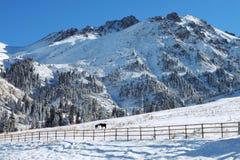 Paarden in Kazachstan Royalty-vrije Stock Afbeelding