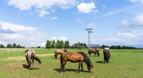 Paarden landbouwbedrijfdieren op weide Royalty-vrije Stock Foto