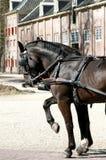 Paarden ('Loo van t Paleis) Royalty-vrije Stock Foto's