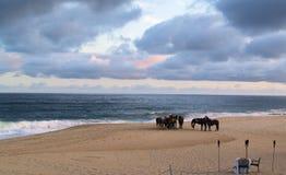 Paarden in Los Cabos Mexico royalty-vrije stock afbeelding