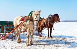 Paarden met sleeën bij de bank van bevroren rivier stock foto