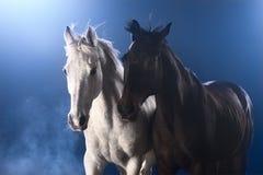 Paarden in mist Stock Foto