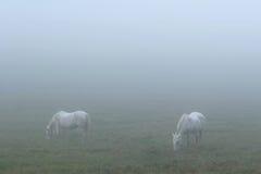Paarden in Mist Royalty-vrije Stock Afbeeldingen