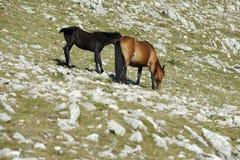 Paarden, Moeder en zoon Royalty-vrije Stock Foto