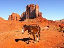 Paarden in Monumentenvallei, Utah - Arizona Stock Foto