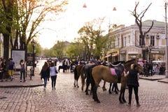Paarden in Odessa Stock Afbeeldingen