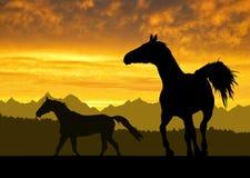 Paarden onder zonsondergang royalty-vrije illustratie