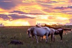 Paarden onder zonsondergang bij Chapada-Dos Veadeiros stock foto