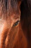 Paarden oog Royalty-vrije Stock Foto's