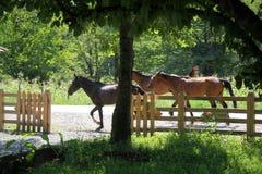 Paarden op aard Royalty-vrije Stock Afbeeldingen