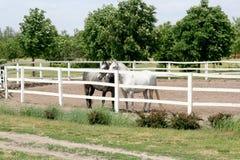 Paarden op boerderij Stock Afbeeldingen