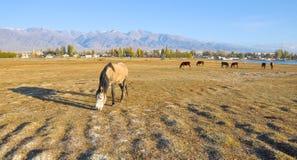 Paarden op de de herfstweide door het meer Royalty-vrije Stock Afbeelding