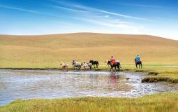 Paarden op de Prairie royalty-vrije stock fotografie