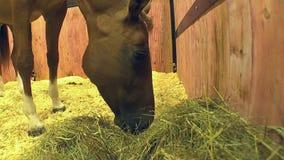 Paarden op de tentoonstellingsveiling stock footage