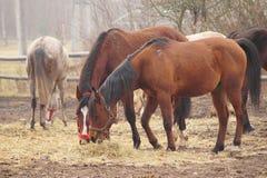 Paarden op de weide. Stock Afbeeldingen