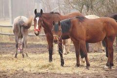 Paarden op de weide. Stock Foto's