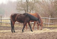 Paarden op de weide Stock Afbeeldingen