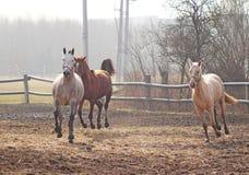 Paarden op de weide Stock Foto