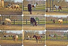Paarden op de weide Stock Foto's