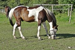 Paarden op de weide, Lodz, Polen Stock Foto