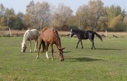 Paarden op de weide, Lodz, Polen Royalty-vrije Stock Afbeeldingen