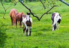 Paarden op Donkere Dag royalty-vrije stock foto