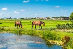 Paarden op een bank Stock Foto's