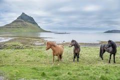 Paarden op een gebied Stock Foto's