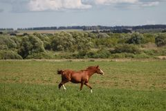 Paarden op een groen gebied royalty-vrije stock foto
