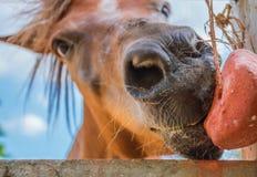 Paarden op een heldere nadruk van het daggezicht van close-uppaarden royalty-vrije stock afbeelding