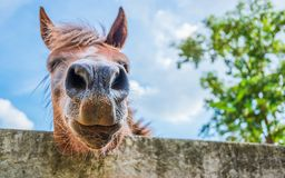 Paarden op een heldere nadruk van het daggezicht van close-uppaarden stock foto's