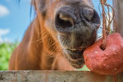 Paarden op een heldere nadruk van het daggezicht van close-uppaarden royalty-vrije stock foto