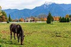 Paarden op een Landbouwbedrijf Stock Fotografie