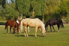 Paarden op een landbouwbedrijf in de de herfstweide Royalty-vrije Stock Foto