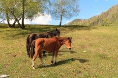 Paarden op een open plek Stock Afbeeldingen