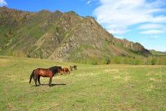Paarden op een open plek Royalty-vrije Stock Foto's