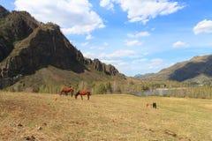 Paarden op een open plek Stock Afbeelding