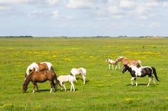Paarden op een weide Royalty-vrije Stock Afbeelding