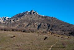 Paarden op een weiland Stock Afbeeldingen
