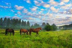 Paarden op een weiland Royalty-vrije Stock Afbeeldingen