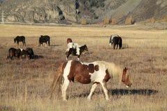 Paarden op een weiland Stock Fotografie