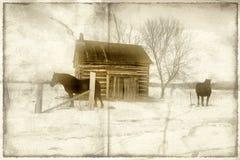 Paarden op gebied Stock Foto